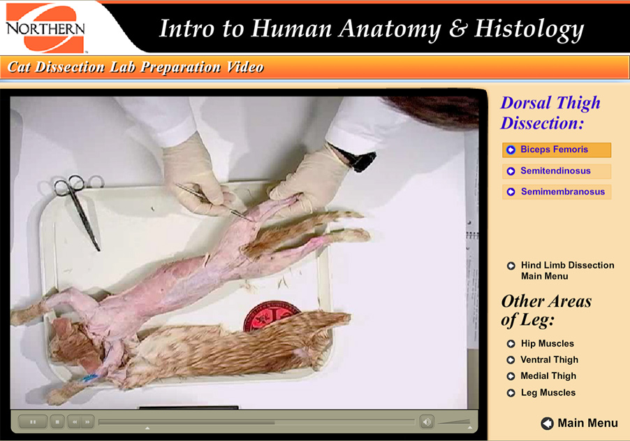 An Interactive Cat Dissection Lab Preparation Guide